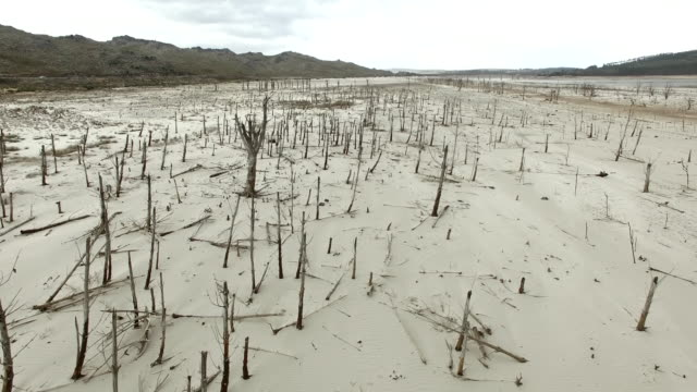 dead trees in a dried up dam - drought stock videos & royalty-free footage