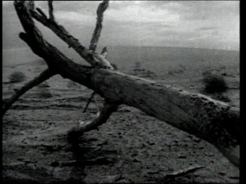 vidéos et rushes de dead trees in drought blighted landscape / usa - fondu de fermeture