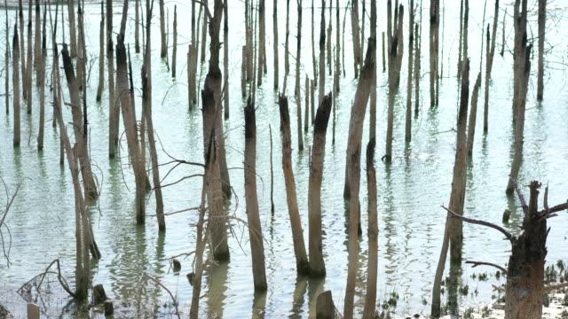 vídeos y material grabado en eventos de stock de los árboles muertos en el lago - seco