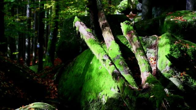 vidéos et rushes de hs mort des arbres dans la forêt d'automne mystique - vanitas