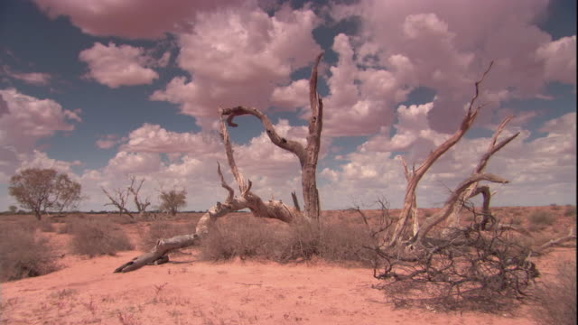 dead trees in the outback, new south wales. available in hd. - outback stock videos & royalty-free footage