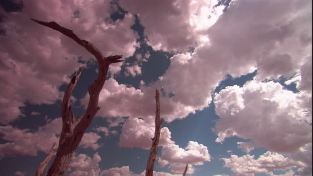 Dead trees in the outback, New South Wales. Available in HD.