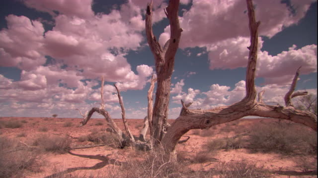 vídeos y material grabado en eventos de stock de dead trees in the outback, new south wales. available in hd. - sequía