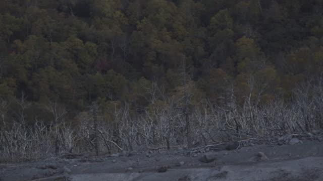 vídeos de stock, filmes e b-roll de dead trees in volcanic landscape, kamtchatka, 2009 - lava