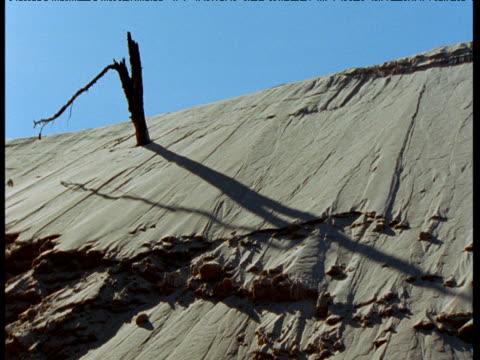 dead trees on athabasca dunes, saskatchewan - saskatchewan stock videos and b-roll footage