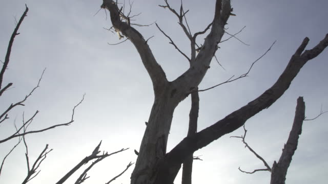 dead trees - bare tree stock videos & royalty-free footage
