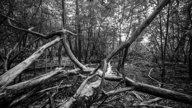 dead trees. - dead stock videos & royalty-free footage