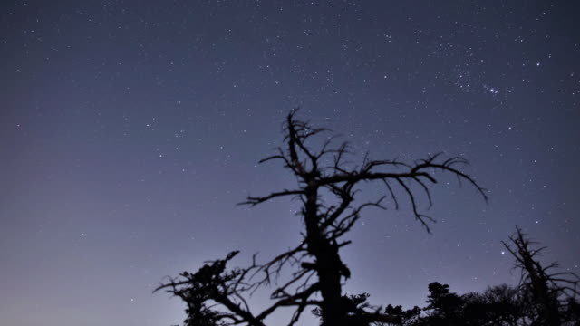 ms t/l ds dead trees with stars at jeju-do halla mountain / jeju-do, south korea - branch stock videos & royalty-free footage