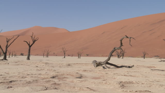 Dead Vlei, Sossusvlei - Trees (Acacia) on dry lake bed