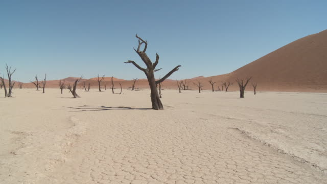 dead vlei, sossusvlei - trees (acacia) on dry lake bed - lake bed stock videos & royalty-free footage