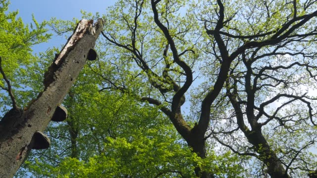 Dead wood in forest, Taben-Rodt, Rhineland-Palatinate, Germany, Europe