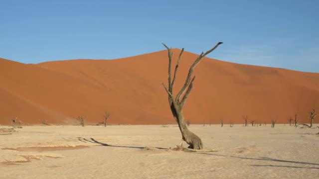 deadvlei in namibia - acacia tree stock videos & royalty-free footage