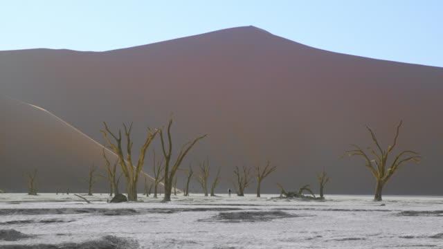wsデッドフライの木と雄大な砂漠砂丘、ナミビア、アフリカ - 有名原生地域点の映像素材/bロール