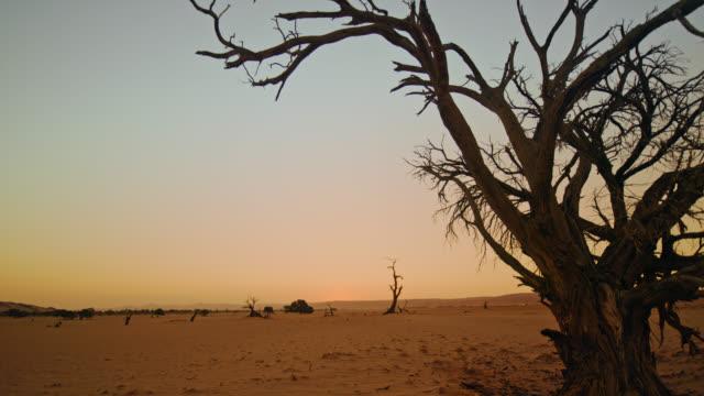 日没時のwsデッドブレイの木と静かな風景、ナミビア、アフリカ - 有名原生地域点の映像素材/bロール