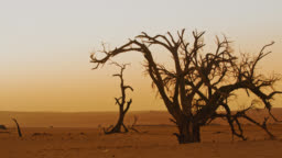 WS Deadvlei trees in tranquil desert landscape at sunset,Namibia,Africa
