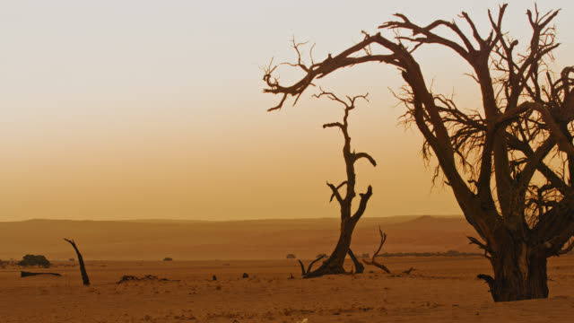 ws deadvlei trees in tranquil desert landscape,namibia,africa - natural parkland stock videos & royalty-free footage