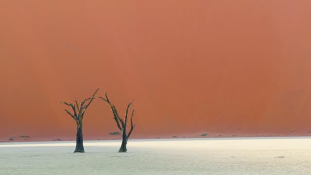 砂丘、ナミビア、アフリカに対する白い粘土鍋のwsデッドブレイの木 - 小枝点の映像素材/bロール