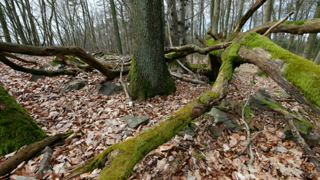 deadwood in forest - fallen tree stock videos and b-roll footage