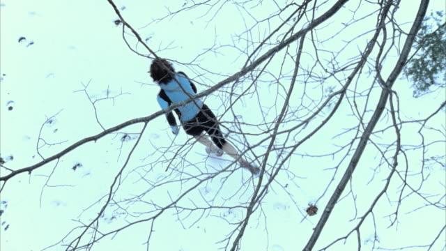 SLO MO HA MS Death figure on horseback chasing woman running through winter woods, Morrisville, Vermont, USA