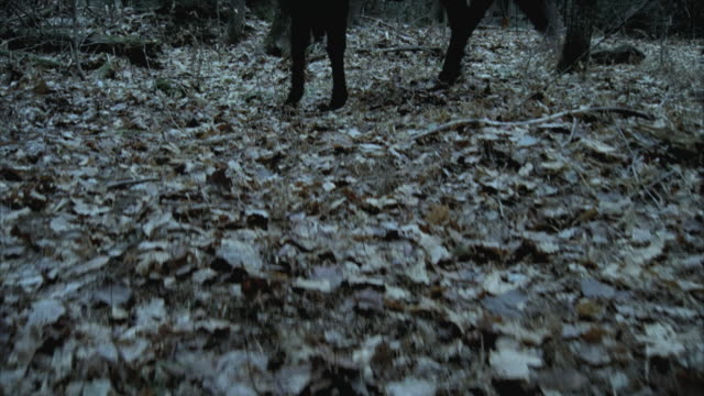 cu tu ms death figure on horseback standing in woods, morrisville, vermont, usa - hood clothing stock videos & royalty-free footage