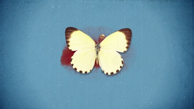 death of butterflys - farfalla video stock e b–roll