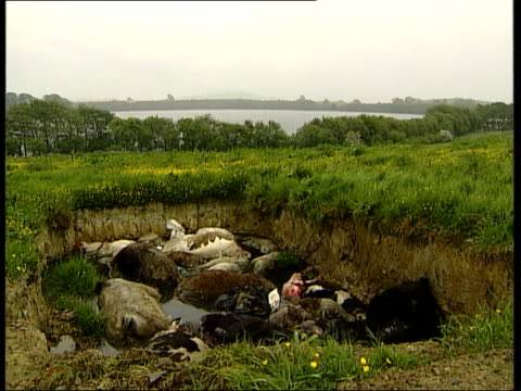 Nr Dumfries Seq TCMSs Skeletons of cattle in bottom of open pit West of Dumfries Seq Shots of another open pit on hillside above Milton Loch...