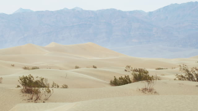 death valley national park: mesquite flat sand dunes - death valley national park stock videos & royalty-free footage