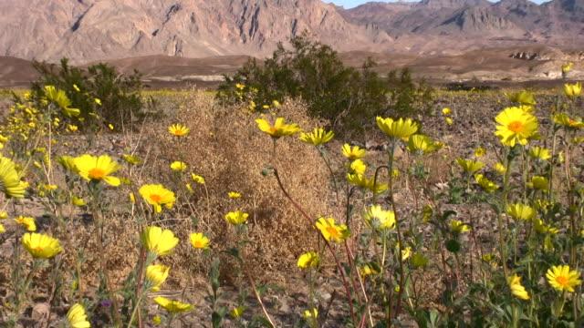 vídeos y material grabado en eventos de stock de valle de la muerte - parque nacional death valley