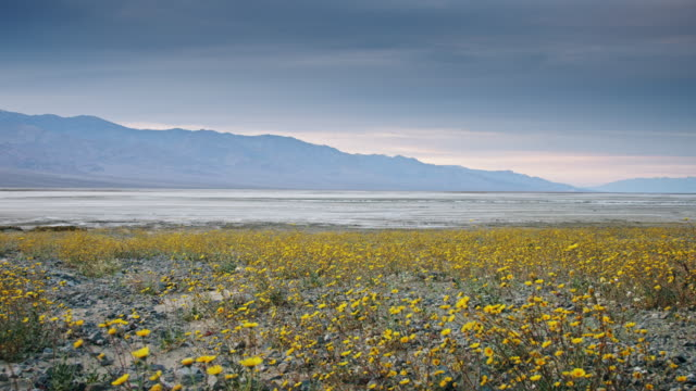 Death Valley Super Bloom at Sunset