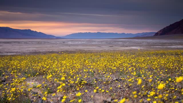 Death Valley Super Bloom Sunset - Timelapse