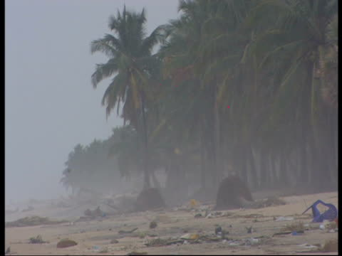 debris and up-rooted trees litter a beach following the 2004 indian ocean tsunami. - 2004 stock-videos und b-roll-filmmaterial