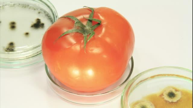 Decaying Tomatos HD