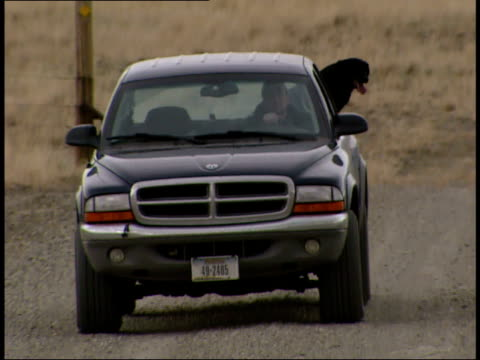 vídeos y material grabado en eventos de stock de december 19 2006 ts pickup truck with dog in the back driving by on a dirt road / montana united states - estilo del 2000