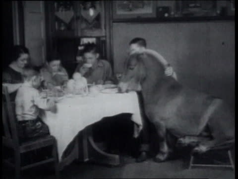 December 23, 1936 Midget draft horse sitting on a stool and eating dinner at the family table
