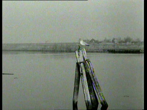 stockvideo's en b-roll-footage met december 24, 1952 b/w crossing with the ferry boat from the harbour of monnikendam over the gouwzee to marken. on the way, the boat has to break through thick layers of ice / monnickendam, marken, noord-holland, netherlands - noord holland
