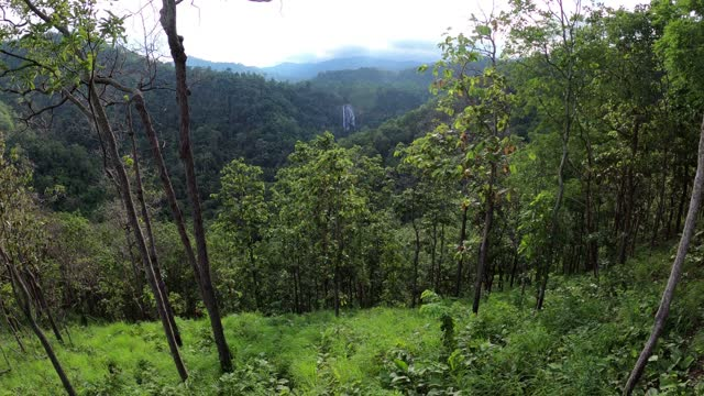 deciduous dipterocarp forest with green grass field - four seasons stock videos & royalty-free footage