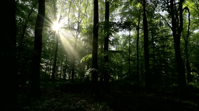 deciduous forest in the morning with sun, spessart, bavaria, germany - plant attribute stock videos and b-roll footage