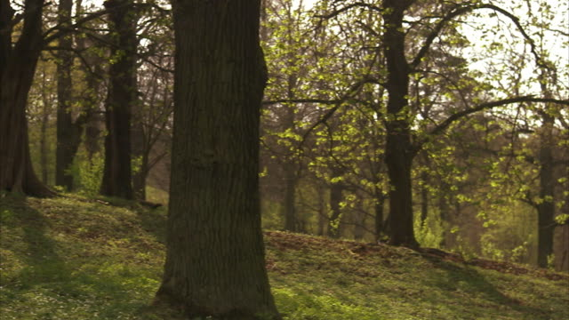 a deciduous forest stockholm sweden. - deciduous stock videos & royalty-free footage