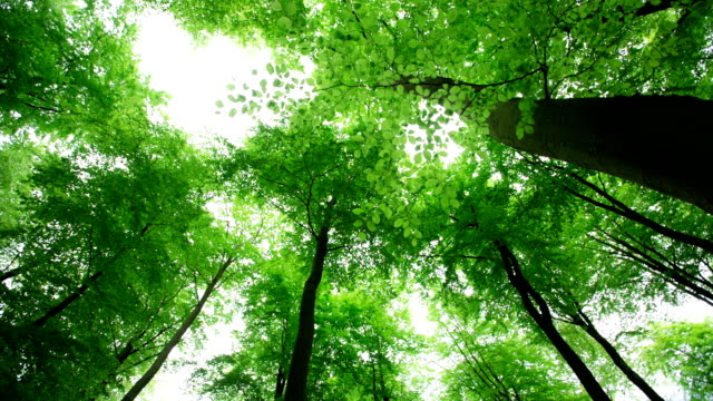 stockvideo's en b-roll-footage met deciduous forest - low angle view