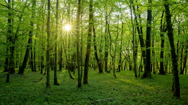 deciduous forest with sun in spring, sodenberg, hammelburg, district bad kissingen, rhön, bavaria, germany - deciduous stock videos & royalty-free footage