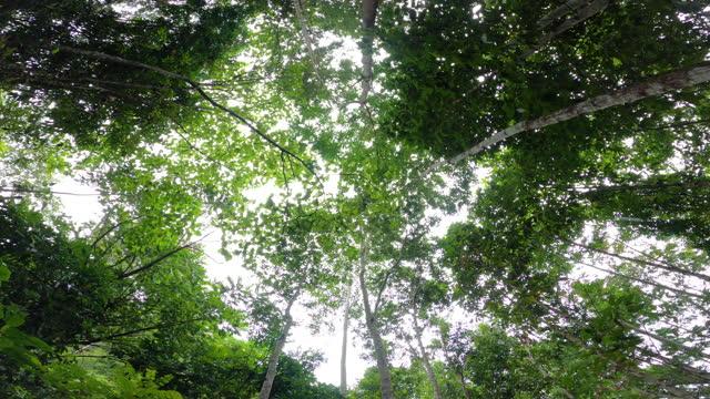 vídeos de stock e filmes b-roll de deciduous tree against blue sky - pinhal