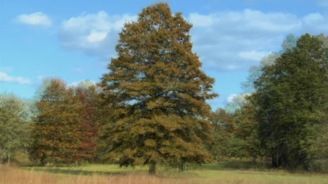 ws deciduous tree changing during summer, autumn, winter, and spring / oldwick, new jersey, usa - le quattro stagioni video stock e b–roll