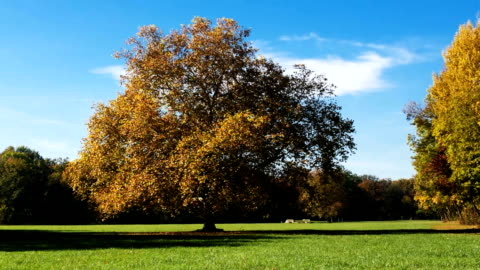 deciduous tree in autumn - time lapse - deciduous tree stock videos & royalty-free footage