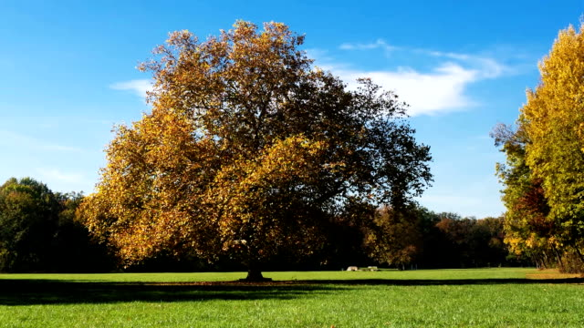 deciduous tree in autumn - time lapse - deciduous stock videos & royalty-free footage