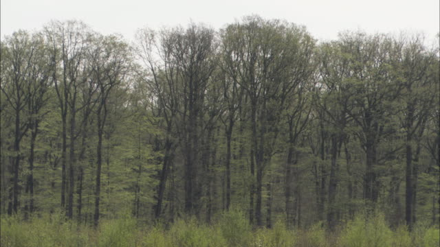deciduous trees line the edge of a forest in northwest france. - deciduous stock videos & royalty-free footage