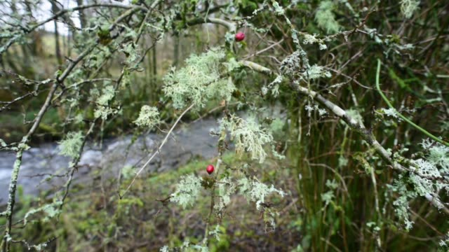 deciduous woodland close to the water of gregg - david johnson stock videos & royalty-free footage