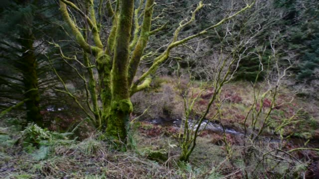 deciduous woodland in south ayrshire. - david johnson stock videos & royalty-free footage
