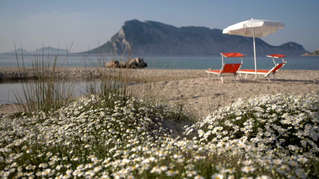 deck chairs on the beach in springtime (sunset) - spiaggia stock videos & royalty-free footage