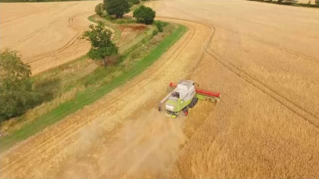decline of wild bee populations in england linked to controversial pesticides air view / aerial / drone footage of field of oilseed rape rapeseed/... - oilseed rape stock videos & royalty-free footage