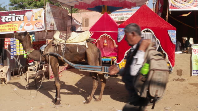 decorated camel and wagon at pushkar mela fair whenit comes alive with vibrant folk music and dances horse and camel races religious bathing and a... - religious music stock videos and b-roll footage